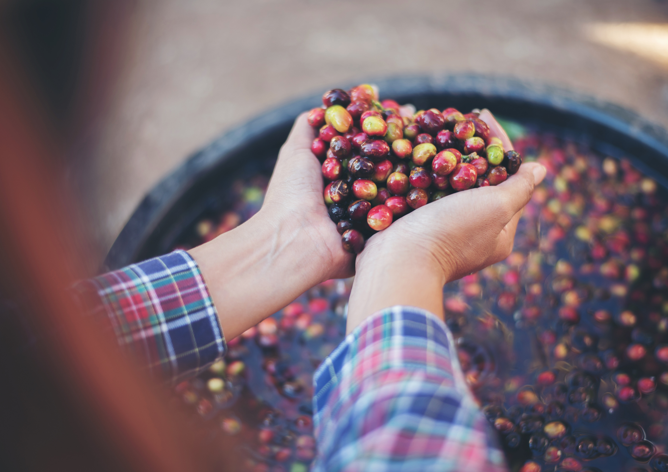 Everything You Need To Know About Single Origin Coffee Beans
